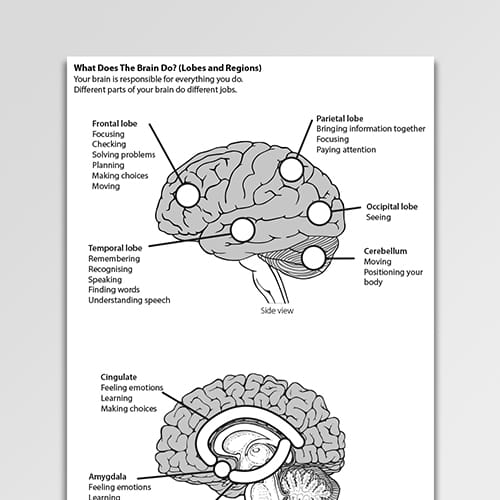 What Does the Brain do (lobes and regions)?