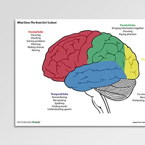 What does the brain do? (lobes)